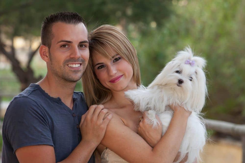 Malteser Hund mit Mann und Frau