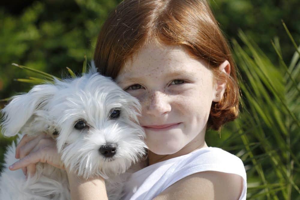 Mädchen hält ihren Malteser Hund im Arm