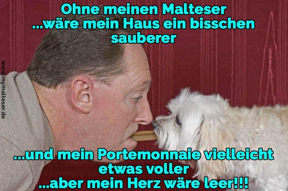Ein Mann teilt sich einen Wafer mit seinem Malteser