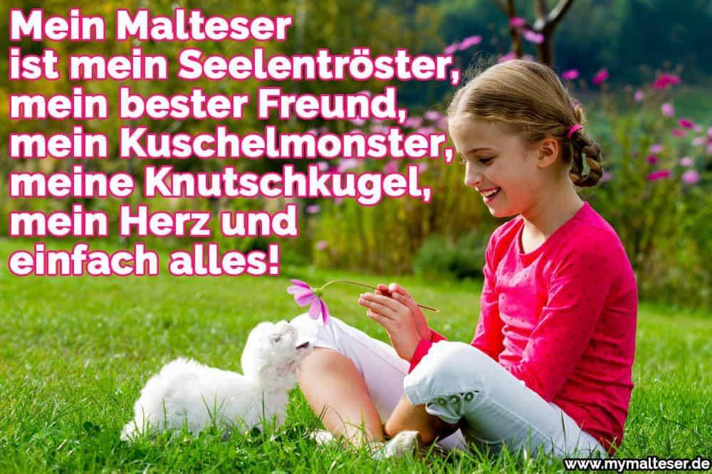 Ein Mädchen spielt mit ihrem Malteser