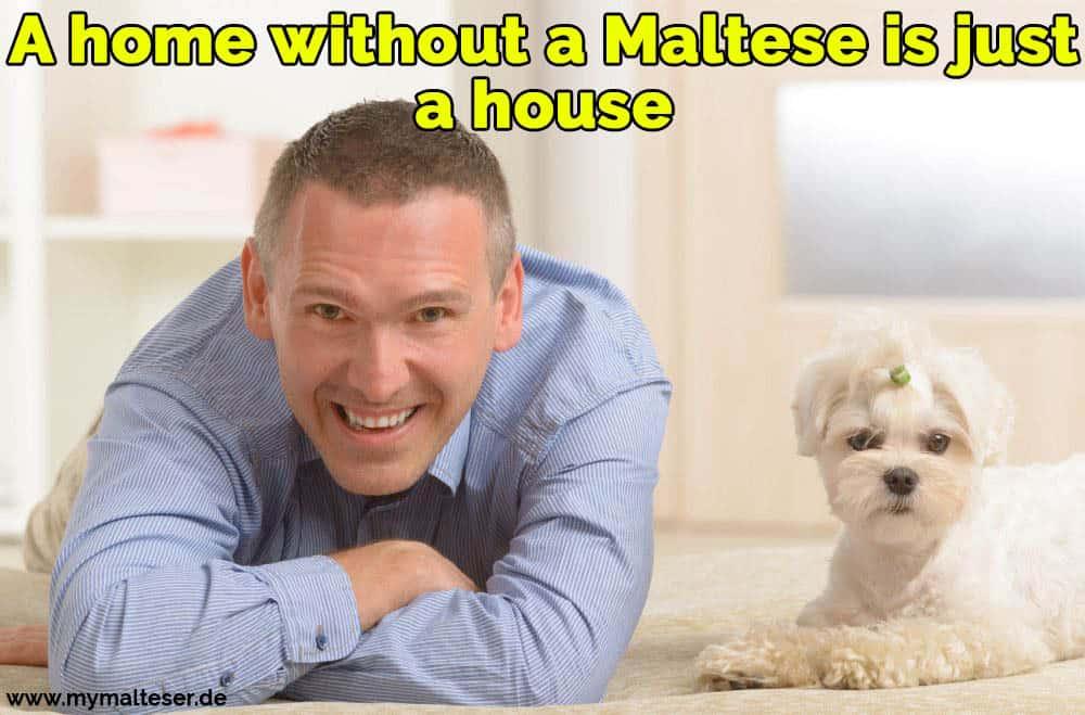 Ein Mann liegt mit seinem Malteser auf dem Boden