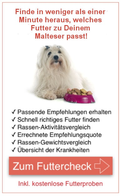 Search Q Maltipoo Tbm Isch